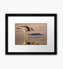Water Thick-knee Framed Print