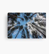 swaying tops of bare trees  Canvas Print