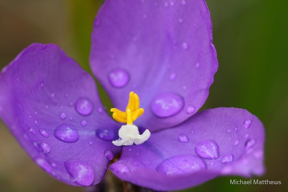 Purple rain by Michael Matthews