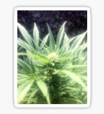 Nice green flower Sticker