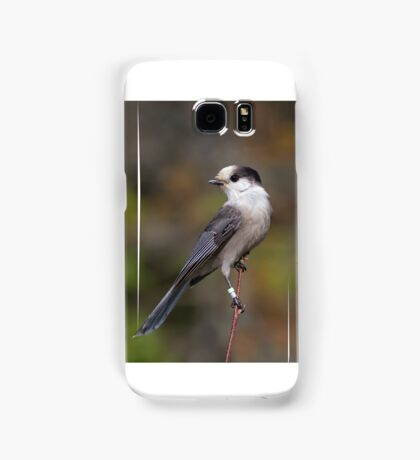 Gray Jay in Algonquin Park Samsung Galaxy Case/Skin