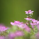 Tiny Delights by Tracy Friesen