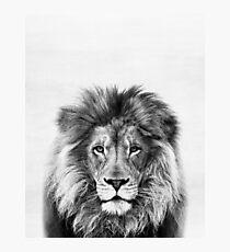 Löwe Fotodruck