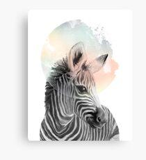 Zebra // Träumen Leinwanddruck
