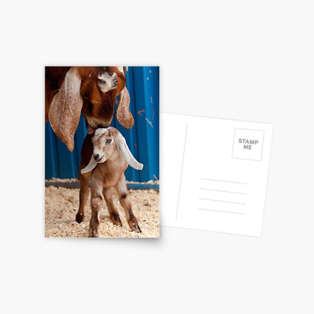 Geleckt sauber Postkarte