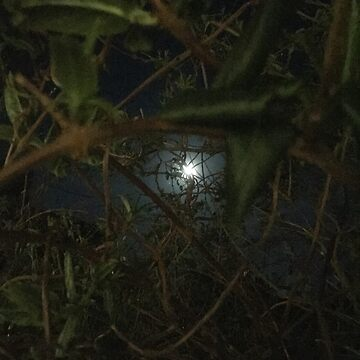 Moon through leaves by Wokswagen