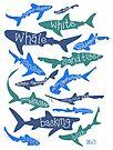 Sharks! by Jen Richards