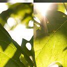Leaf Glow: Sunlight through the greenery by wonderkay