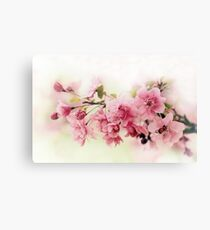Faded Blossom Canvas Print