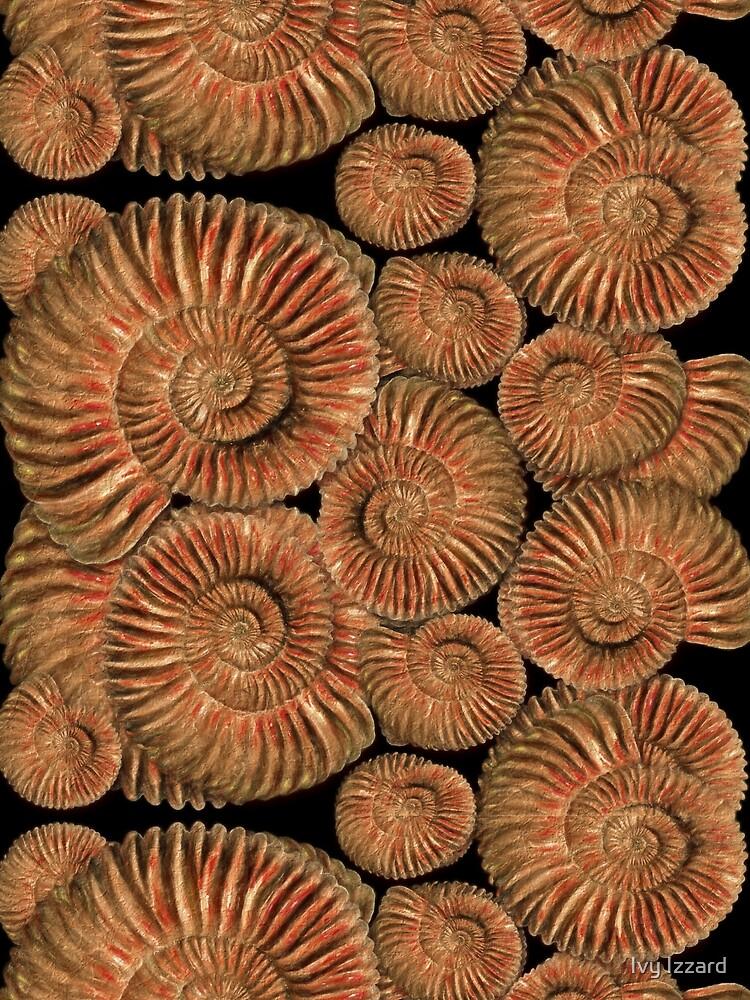 Ammonites by iizzard