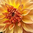 Dahlia Dazzle by Monnie Ryan