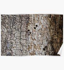 Wooden texture. Tree bark. Poster