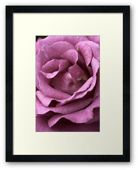 Dusty Pink  by Joy Watson