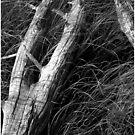 Driftwood and Sawgrass Monochrome by Wayne King