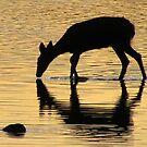 I Am Little Deer by Jan Landers