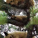 Bear Blessings by Jan Landers