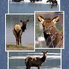A Day at the Lake (Elk) by Jan Landers