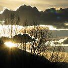 Sunset Vision by Jan Landers