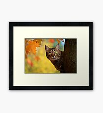 Fall Cat Framed Print