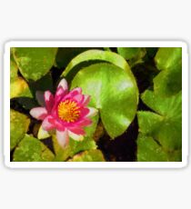 Pretty in Pink - a Waterlily Impression Sticker