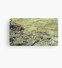 Textures of Earth Canvas Print