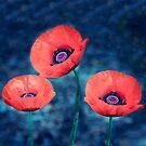 Poppy trio by LudaNayvelt