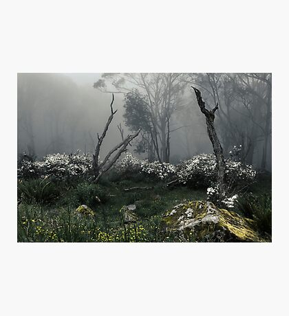 Fogscape Photographic Print