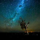 Spotlit under the stars  by David Haworth