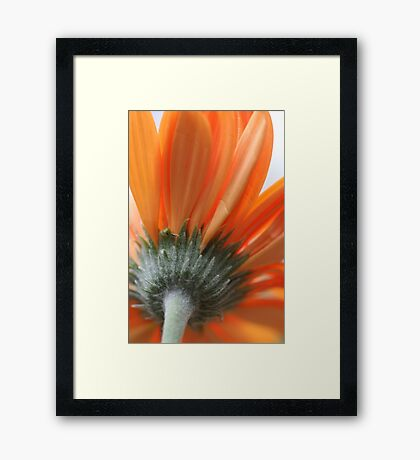 Bright Orange Framed Print