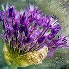 Allium Blossoms by LudaNayvelt