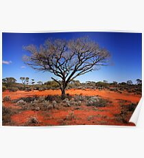 Outback Tree Poster