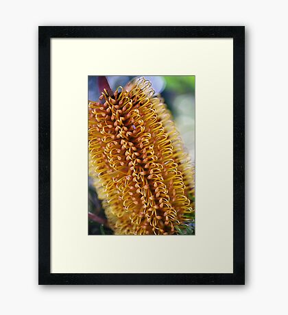 Banksia Living Candle Framed Print