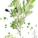 Culinary Herbs - Parsley by wherefishsing