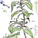 Culinary Herbs - Vietnamese Mint by wherefishsing