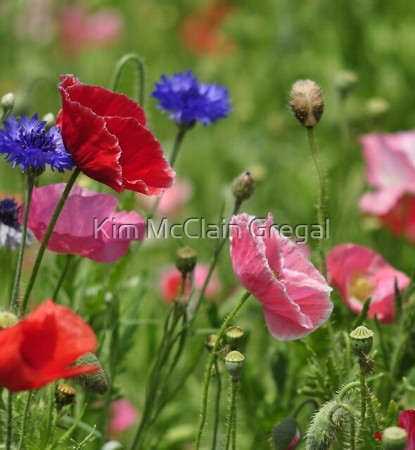 Poppies, As Is by Kim McClain Gregal