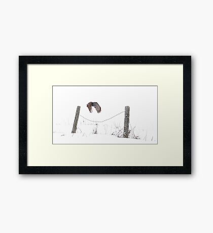 Post to Post - Great grey owl Framed Print
