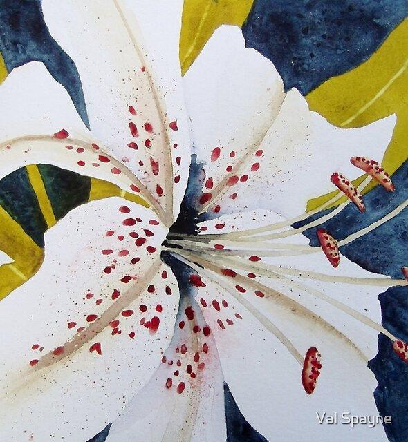 Lily by Val Spayne