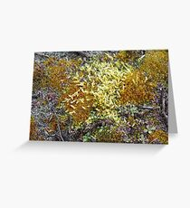 Different types greeting cards redbubble moss on ground 2011 greeting card m4hsunfo