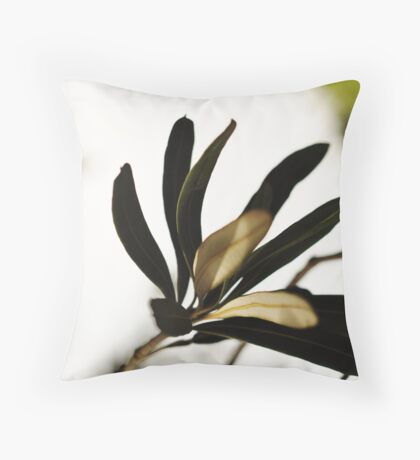 Chiaroscuro Throw Pillow