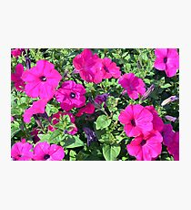 Beautiful spring purple flowers in the park. Photographic Print