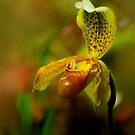 Tones of Autumn by Linda Cutche