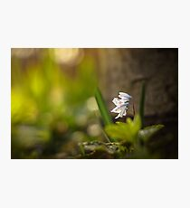 Wonderful nature Photographic Print