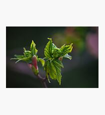 Bud Photographic Print