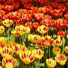 Red with Yellow and Yellow with Red by Arie Koene