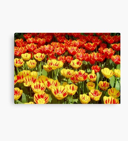 Red with Yellow and Yellow with Red Canvas Print