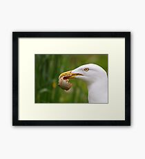 Egg Thief Framed Print