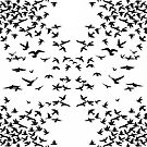 Birds White and Black by Jessica Slater