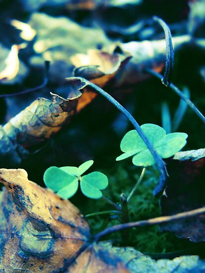 Dead Leaves and Clovers by SaradaBoru