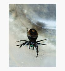 Cute Fuzzy Spider Photographic Print