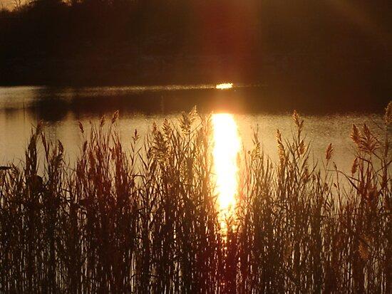 Golden Reflection by SaradaBoru